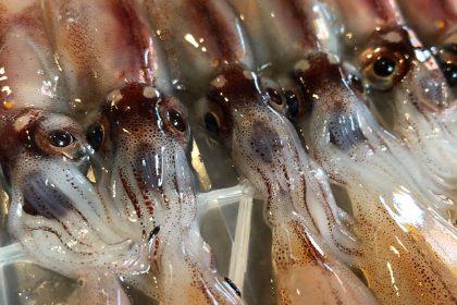 ほどほど屋エイトの美味しいは楽しいのDELICIOUSISFUNの指扇の居酒屋の自然栽培のたかやま農園の新鮮な魚の安心安全な食材のアレルギー対応の子連れでも安心の石臼挽きの自家製粉の在来種の固定種の手打ちの十割蕎麦のアットホームの未来のこどもたちの寄り合いの横につながるのグルメの駅から徒歩10分の老若男女の自然食のオーガニックの無添加の自家製の自家栽培の自家採種のサンスマイルのかぎろひのみんなで保育ととの自主保育の地域での子育ての親子で楽しくの駐車場有りの固定種の伝統野菜の種取りのわがらしの和がらしのかずがらしのとんかつのハンバーグの薩摩放牧黒豚のリビセンの自家製明太子の自家製調味料のまるおかのミコト屋のりんねしゃの
