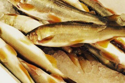 ほどほど屋エイトの美味しいは楽しいのDELICIOUSISFUNの指扇の居酒屋の自然栽培のたかやま農園の新鮮な魚の安心安全な食材のアレルギー対応の子連れでも安心の石臼挽きの自家製粉の在来種の固定種の手打ちの十割蕎麦のアットホームの未来のこどもたちの寄り合いの横につながるのグルメの駅から徒歩10分の老若男女の自然食のオーガニックの無添加の自家製の自家栽培の自家採種のサンスマイルのかぎろひのみんなで保育ととの自主保育の地域での子育ての親子で楽しくの駐車場有りの固定種の伝統野菜の種取りのわがらしの和がらしのかずがらしのとんかつのハンバーグの薩摩放牧黒豚のリビセンの自家製明太子の自家製調味料のまるおかのミコト屋のりんねしゃのpurveyorsのクッキークルの森道市場のブラウンズフィールドの森道市場の丑の日の土用の丑の日の川遊びの読売新聞の